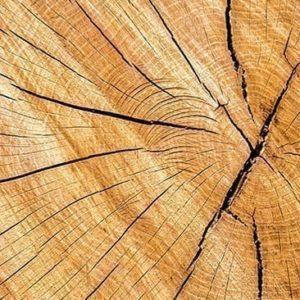 Prodotti base in legno